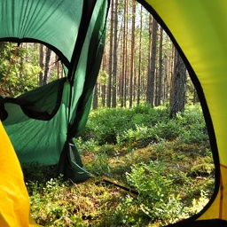 Morning view from the tent